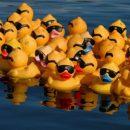26 mei | Heb jij al een badeendje?